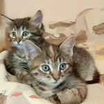 Передержка собак и котов в домашних условиях