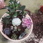 Уход за растениями. Пересадка растений.