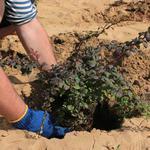Деревья и кустарники - Посадим и пересадим