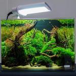Профессиональный дизайн аквариума (Акваскейп)