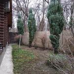 Услуги садовника.Обвязка растений с целью защиты от разломов.