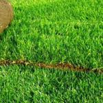Озеленение участка, автополив, рулонный газон
