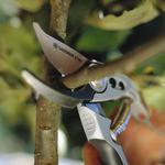 Профессиональная обрезка и формирование плодовых, ягодных, декоративных деревьев и кустарников.