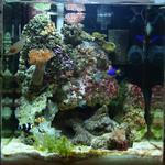 Обслуживание установка аквариумов, морские и пресные