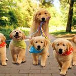 Выгул собак, животных