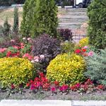Создание композиций из декоративных растений и цветов