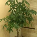 Уход за комнатными растениями в доме,офисе, любом другом помещении