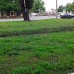 Покос газонной травы.
