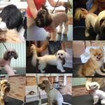 Стрижка собак любой породы