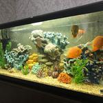 Чистка аквариума,обслуживание аквариума