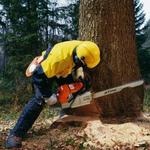Валка и обрезка деревьев