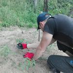Уход и разработка участка, уборка територии, посадка и уход за растениями
