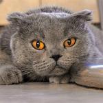 Приму на передержку вашего кота (актуально)