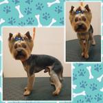 Комплексная стрижка собак в салоне на Троещине