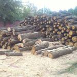 Порезка дров.