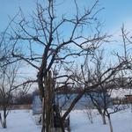 Срежу/обрежу правильно деревья