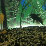 Обслуживание аквариумов: чистка, уход, консультация.