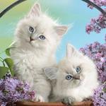 Передержка котиков с любовью!