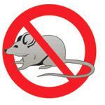 Уничтожение мышей Днепр